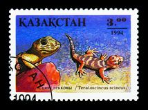 Frog-eyed Gecko (Teratoscincus scincus), Reptile serie, circa 19. MOSCOW, RUSSIA - NOVEMBER 26, 2017: A stamp printed in Kazakhstan shows Frog-eyed stock images
