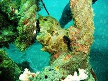 Frog fish Stock Photos