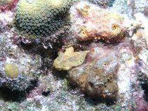 Frog Fish stock images