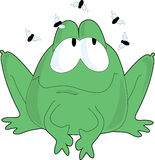 Frog Flies. A single frog with flies buzzing around his head Royalty Free Stock Images