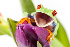 Frog on flower Stock Images