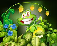 Frog and flower Stock Photos