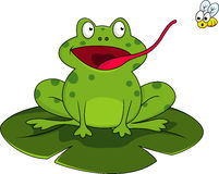 Frog with fly Royalty Free Stock Photography
