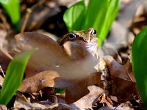 A frog in the foliage stock photography