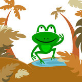 Frog in forest Royalty Free Stock Image