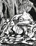 Frog in the forest. Hand drawn ink illustration. Tree frogs in the forest Royalty Free Stock Photos