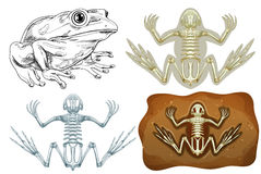 Frog and fossil underground Stock Photo