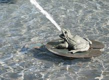 Frog fountain Stock Images