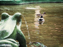 Frog fountain and two mallard ducks Royalty Free Stock Images