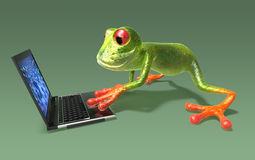 Frog in front of a laptop Royalty Free Stock Photography