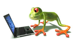 Frog in front of a laptop Stock Photo