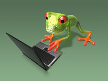 Frog in front of a laptop Stock Photography