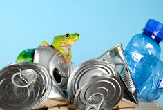 Frog on garbage Royalty Free Stock Photo