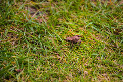 A frog in the garden Royalty Free Stock Image
