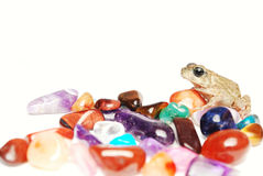 Frog with gems. A Frog with Some earth gems Royalty Free Stock Photography
