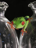 Frog on glass Stock Image