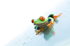 Frog on glass over white Royalty Free Stock Photo