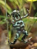 Frog on glass royalty free stock photos