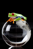 Frog on globe Stock Photo