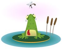 Frog and gnat Royalty Free Stock Photo