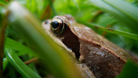 Frog in the grass Stock Photo