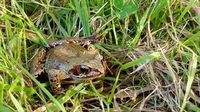 Frog. In grass Stock Image