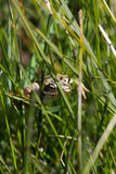 Frog in the grass closeup stock images