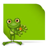 Frog and green background Stock Photography