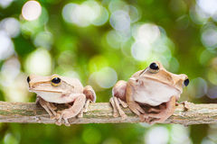 Frog on green bokeh background Stock Images