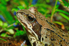 A frog in green grass, Stock Photography