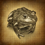 Frog grunge. Frog on an old grunge parchment texture as a symbol of conservation and protecting wildlife and all of nature for the  environmental goal of clean Royalty Free Stock Photography