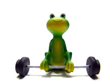Miniature frog lifting barbell Stock Photo