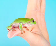 Frog on hand Royalty Free Stock Images