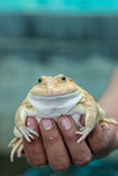 Frog in a Hand Stock Photo