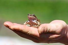 Frog on hand. Stock Photo