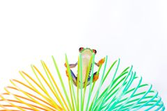 A frog hanging on to a colorful toy Stock Images