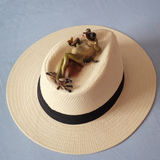 Frog on hat. Relax concept. Figurine of frog is lying on a beach hat Royalty Free Stock Image