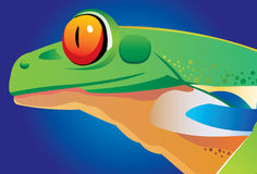 Frog head Royalty Free Stock Photo
