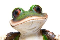 Frog Head with Big Eyes. Green toy frog head on white Royalty Free Stock Photo