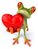 Frog with a heart Royalty Free Stock Photography