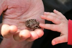 Frog on the hend Stock Photo