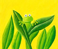 The frog is hiding behind the leaves. Acrylic illustration of the frog is hiding behind the leaves Royalty Free Stock Images
