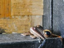 The frog hiding in the steel hole royalty free stock image