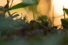 Frog hiding in vegetation. Closeup of a frog hiding in vegetation Stock Images