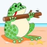 Frog holding a log Stock Photos