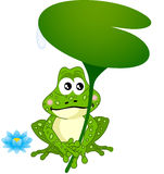 Frog Holding Water Lily Leaf Stock Photos