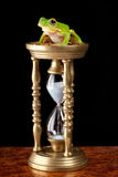 Frog on hour-glass. White-lipped tree frog or Litoria Infrafrenata on an hour-glass royalty free stock photo