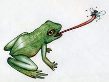 Frog hunting flies Stock Photography