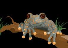 Frog Hyloscirtus pantostictus on black background Royalty Free Stock Photo
