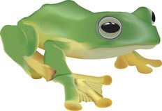 Frog illustration Stock Images